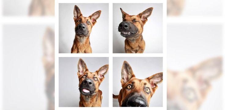 Supersüße Bilder: Hunde im Fotoautomaten