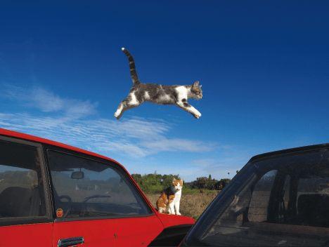 岩合光昭の写真展「世界ネコ歩き」× AQUOS 4K