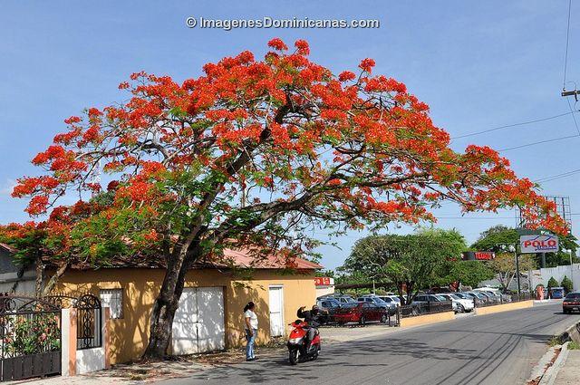 Resultado de imagem para moca dominican republic