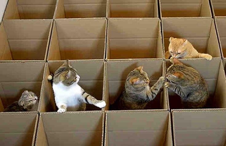 Коты - лучшие игроки в прятки! Они фактически чемпионы среди животных по этому виду спорта. Коты обожают коробки, любят прятаться в укромных уголках и не прекращают охотиться как на разные подвижные предметы, так и друг на друга.  Этот лабиринт, построенный заботливыми хозяевами, - пожалуй, наилуч