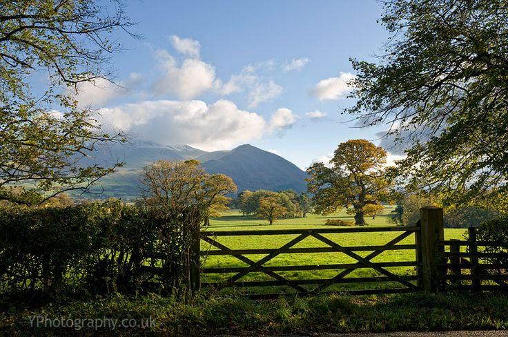 Bassenthwaite Lake: The Farmer's Field and Skiddaw, Cumbria, England