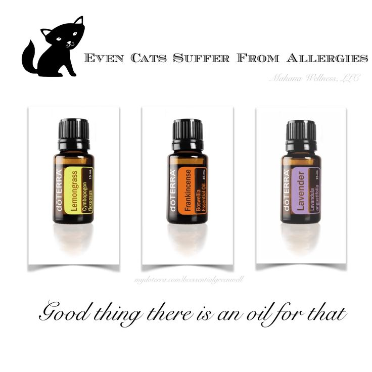 Dilute 1 drop of each oil with 1/4 T FCO and apply 1 drop of the mix 2 times a day to each back paw, on chest, and to the top of the front paw. Cats are very sensitive to essential oils and the oils should always be heavily diluted and only used per instruction. It really takes very little oil for results for your cat.  #allergies #cats #natural #alternatives  #mydoterra.com/beessentialgreenwell