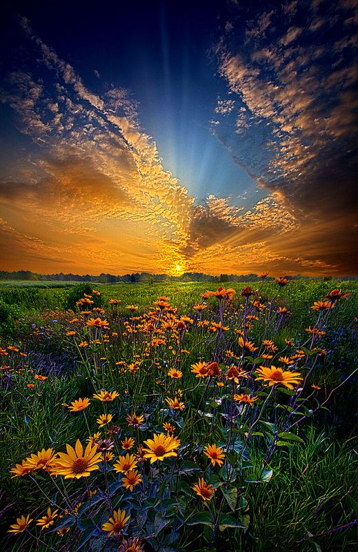 Daisy Dream, Wisconsin Horizons by Phil Koch   - Explore the World with Travel Nerd Nici, one Country at a Time. http://TravelNerdNici.com