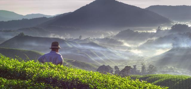 Oplev de smukke teplantager på Sri Lanka