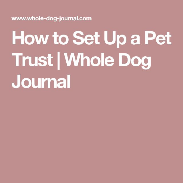 How to Set Up a Pet Trust | Whole Dog Journal