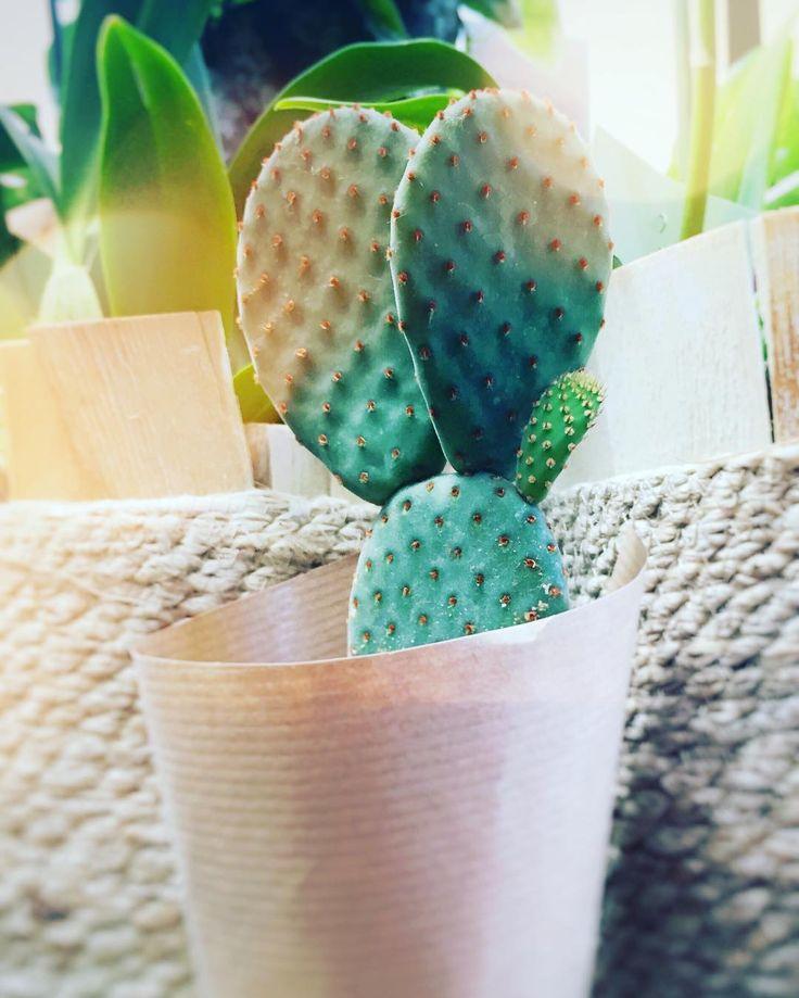 How can you say no to a cute little fella this pretty? #urbanjungle #urbanjunglebloggers #cacti #cactus #cactilove #opuntia