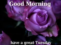 Good Morning Tuesday Images, Quotes, Messages