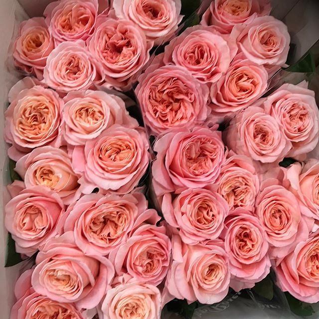 A new favourite garden rose named after our city.. London Eye ! #freshflowersdaily #wholesalesaleflorist #london #newcoventgardenflowermarket #marketlife