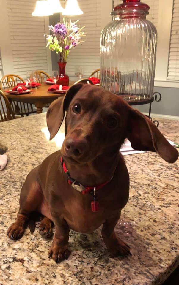 Pin On Awww Doxies