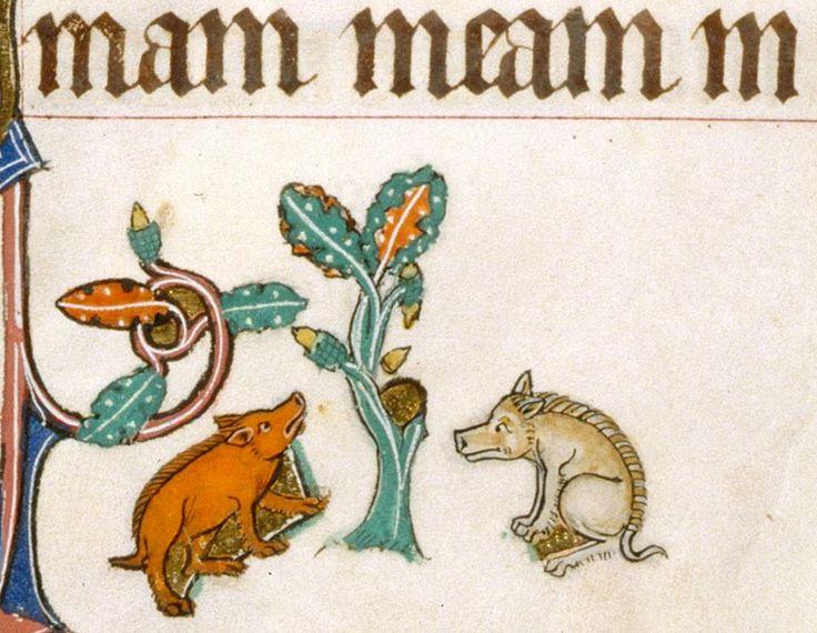 waiting for the acorns  Gorleston Psalter, England 14th century (British Library, Add 49622, fol. 21v)