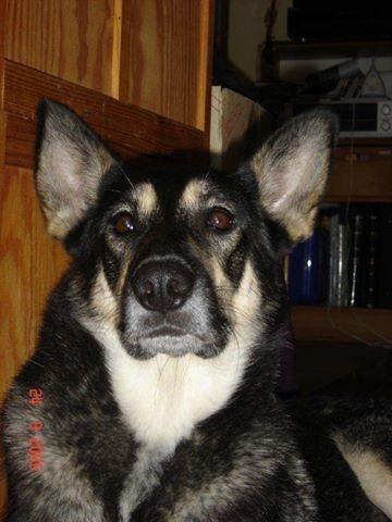 autane è un cane rapito nel 2012 in Italia durante una vacanza  di questi signori francesi. E' stato rubato il loro camper con dentro autane. E un cane addestrato per il salvataggio di persone. Potrebbe essere ovunque. Chi lo avvistasse, anche al guinzaglio di altre persone, è tenuto a contattare i proprietari originali.