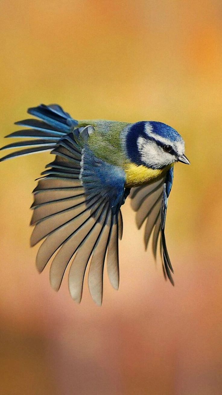 flight psychology of a bird Why do birds fly south for the winter by matt soniak october 17, 2009 around this time of year, i always have to take a break from pumpkin planning and marvel at bird migration.