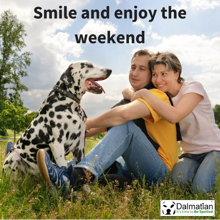 smile and enjoy the weekend. Weekend positivity. Weekend quotes. Dalmatian.