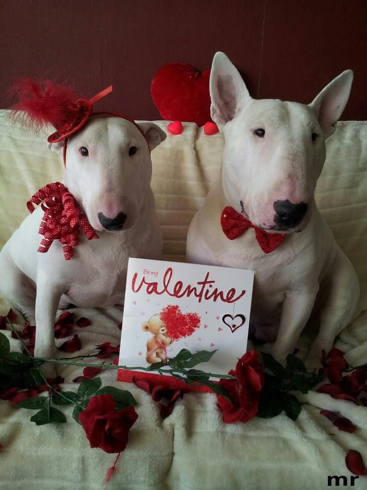 Valentine couple celebrating their love and loyalty - Valentine s day animal pics ...