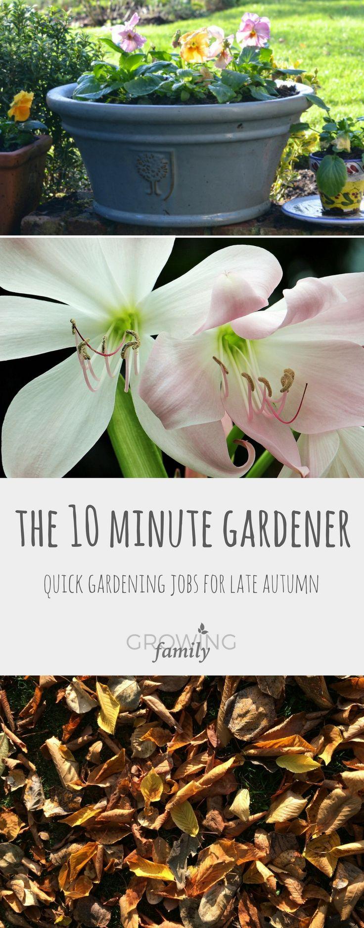 11723 best garden ideas u0026 projects images on pinterest gardening