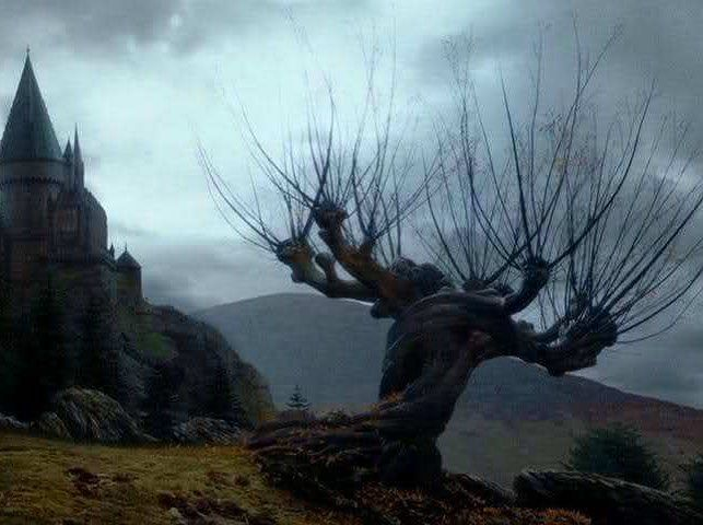 Trivia Answer The Whomping Willow Was Planted To Disguise The Entry To The Shrieking Shack Which Is Where Lupin Wo Fotografias Antigas Fotos Ideias Criativas
