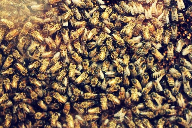Pčela - Page 2 Ef2abd0a6b11b3f27b51ebfd54caf37c