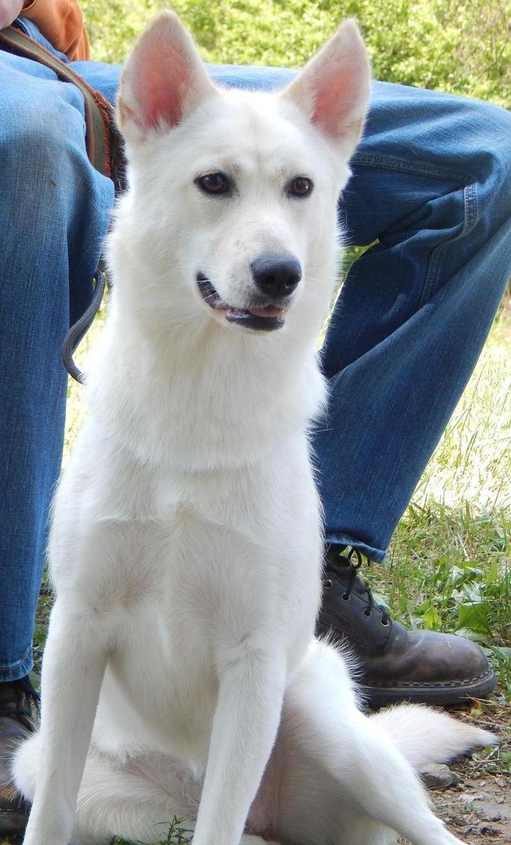 Adopt Roxy (40 lb) on Sand lake, Husky, Dogs