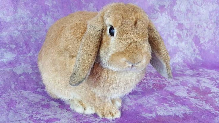 Petition · Pet Supermarket Wilmington NC: Stop the sale of baby rabbits that orginate from breeders (bunny mills) at PetSupermarket. · Change.org
