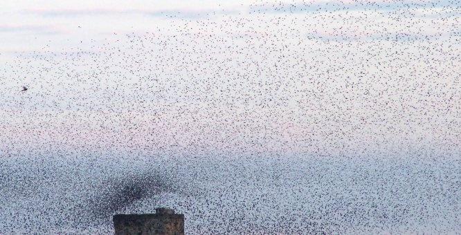 Torre Guaceto, il passaggio degli uccelli migratori e tre bambini nel tempo: partire, tornare, custodire i luoghi.  Un racconto dipinto sullacqua, veloce come le ombre che fanno gli uccelli di passaggio.