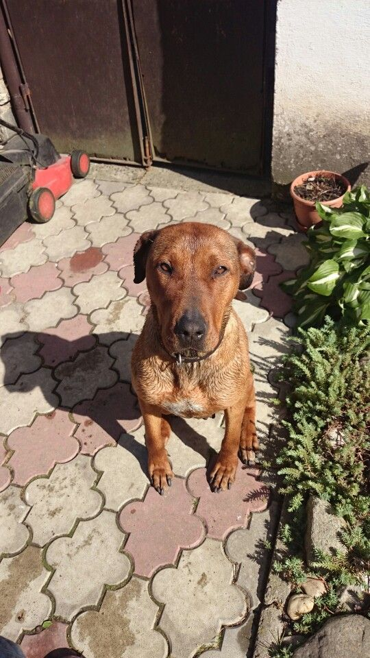 Wet dog :-)