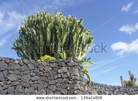 Cactus and Blue Sky Cesar Manrique Foundation Lanzarote Spain Photography by MCHatch  http://www.shutterstock.com/sets/847059-lanzarote.html?rid=1525961