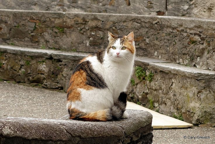 Chat à Caviano (19/25) (2013-04-01 -36)