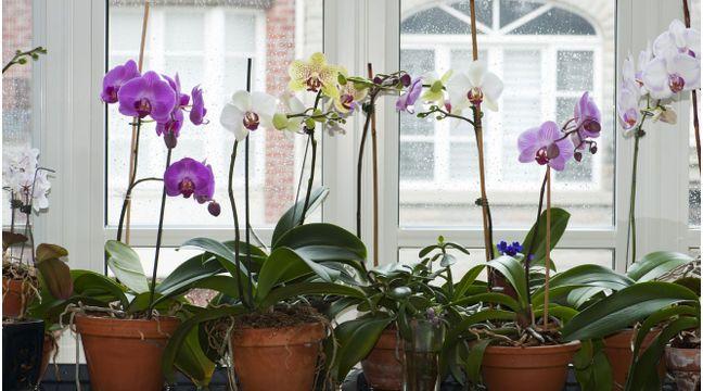 Orchideen: So pflegen Sie die Königin der Blumen