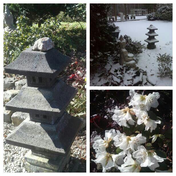 """Rhododendron """" Silk Cap """" zeer vroeg bloeiende Rhododendron.  Met witte klokvormige bloemen, staat nu een paar jaar in de Japanse tuin. Heft kleine bladeren. De bloemen zijn zuiver wit, en trechtervormig,  met mooie donkere meeldraden. We hebben de Rhodo gekocht bij Kwekerij planten tuin Esveld."""