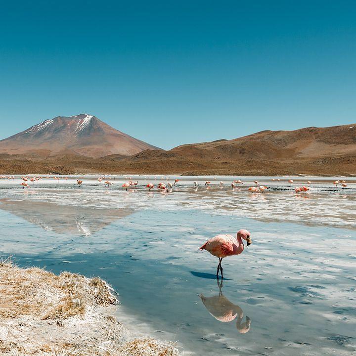 Laguna hedionda . #bolivia