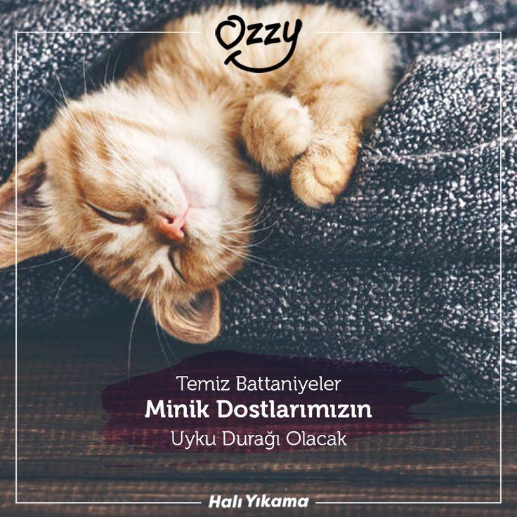 Temiz battaniyeler minik dostlarımızın uyku durağı olacak 🐱 💦🍀 İletişim 444 5 808 ☎️WhatsApp 0549 300 30 40 #halı #halıyıkama #koltukyıkama #bahartemizliği #kurutemizleme #ozzyhalı #evişleri #kalitelihizmet