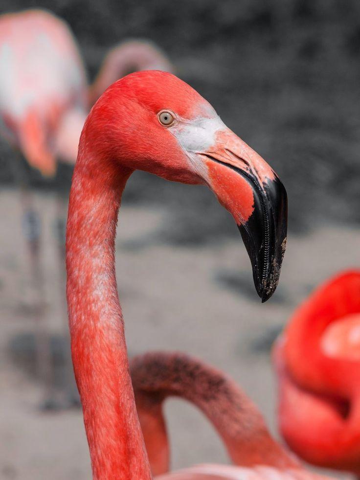 38 best Flamingo images