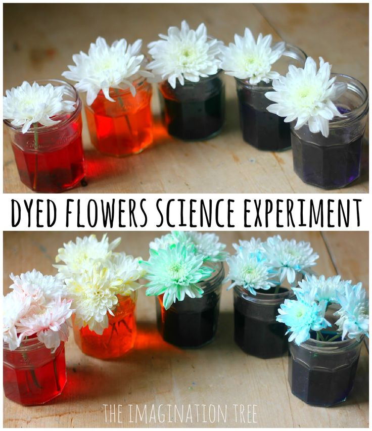 Set up a simple and visually stunning science experiment with the kids to explore the transfer of water through a plant!