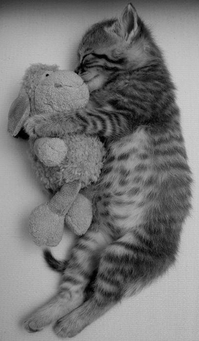 Dit is een kat die aan het slapen is met knuffel. Schattig toch.