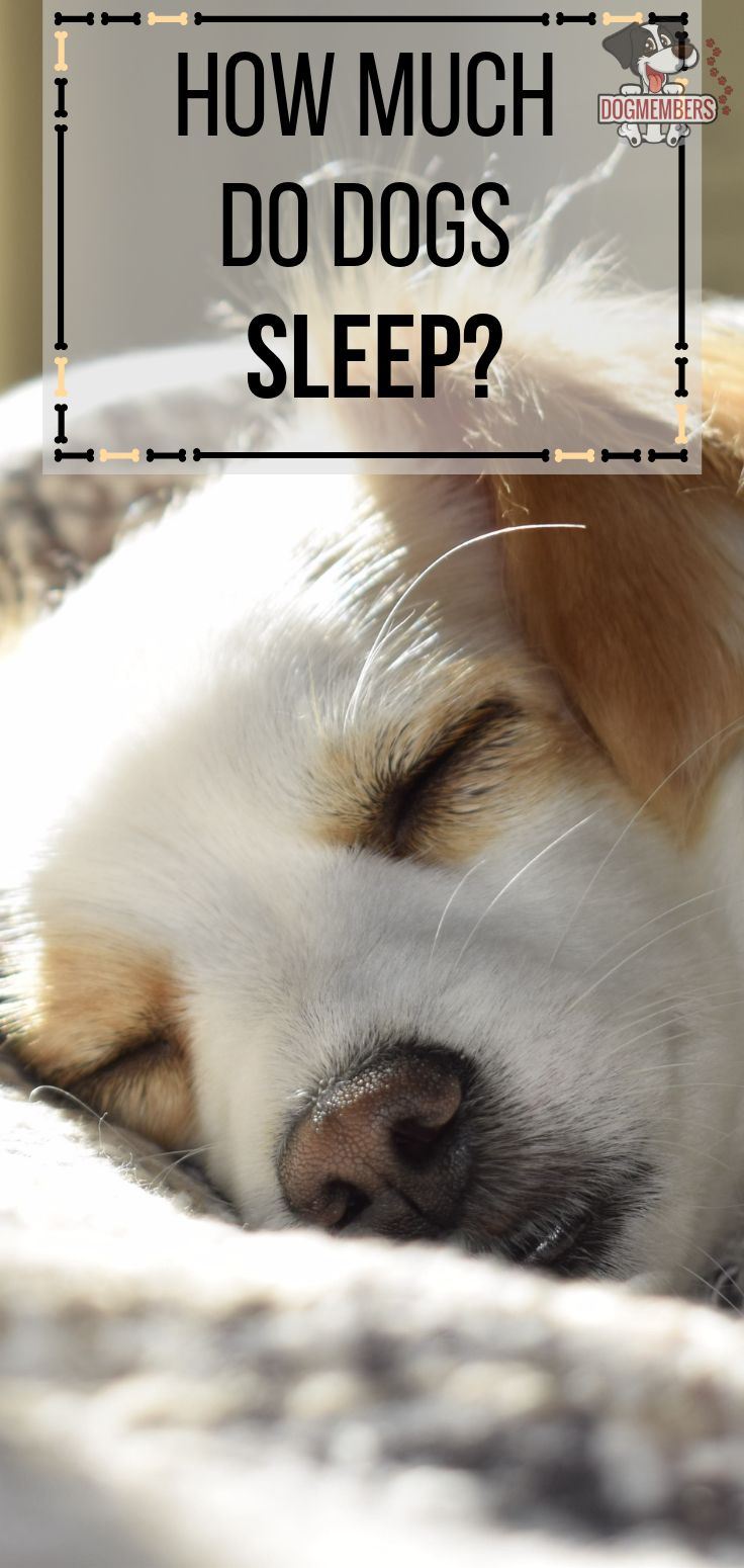 How Much Do Dogs Sleep? Here is everything you need to