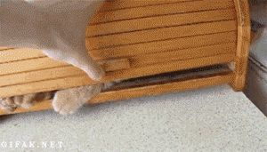 funny cats gif. more here