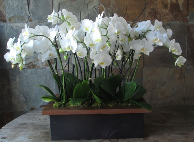Massive short Phalaenopsis orchid plants in an elegant wooden box. Great for foyers, entry ways on a side table etc.