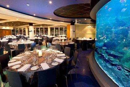 Corporate Functions | SEA LIFE Melbourne Aquarium