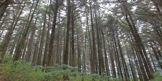 Vista del Parque Nacional Montecristo (El Salvador). EFE