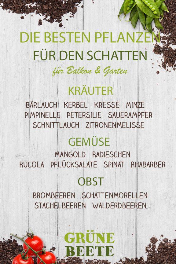 Die 25+ Besten Ideen Zu Balkon Pflanzen Auf Pinterest | Pflanzen ... Gemuse Im Blumentopf Garten Balkon Tipps