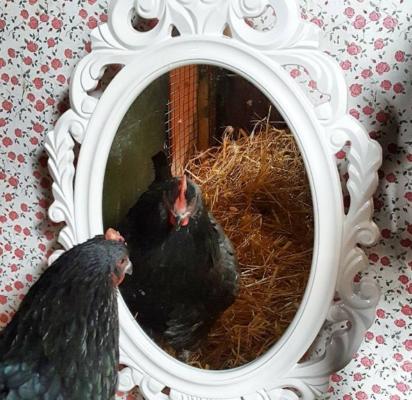Does your coop have a mirror in it? A chandelier? How about a thermometer, vintage egg baskets or other decor? via Fresh Eggs Daily