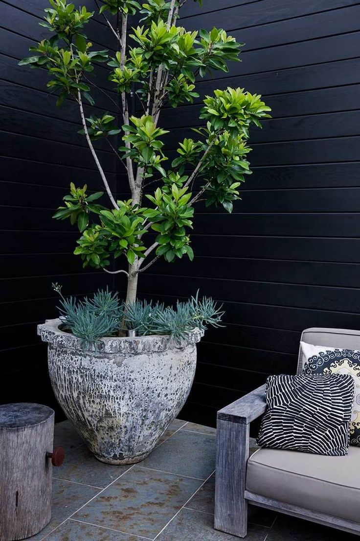 Water Gum (Tristaniopsis Luscious). A hardy Australian native .Image from Adam Robinson Design's Refern Rooftop project