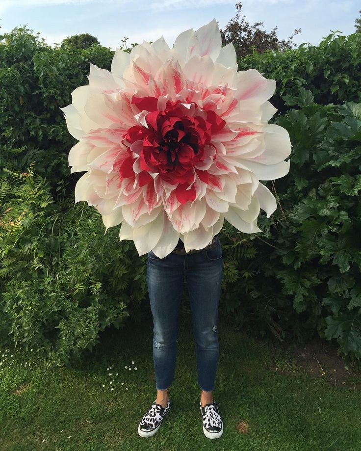 """158 Likes, 48 Comments - Wendy Palmer (@rockingpaperscissors) on Instagram: """"Giant hand painted crepe paper flower #crepepaperflowers #crepepaper #handmade #handpainted…"""""""