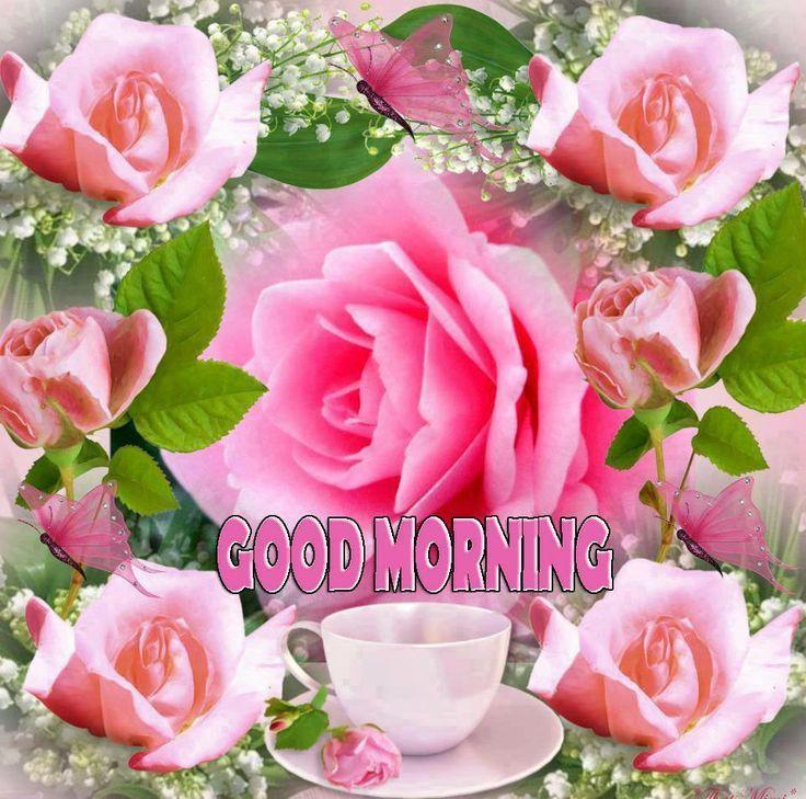 Good Morning Beautiful Pink Roses : B c d f bb g � good