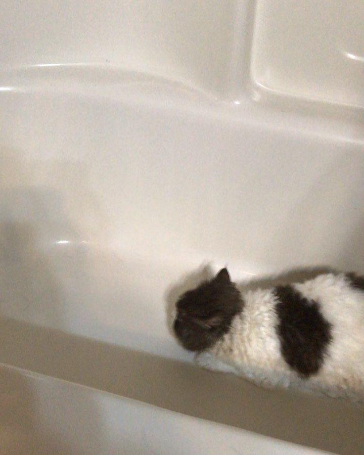 Appa Porg On Instagram Appa Showing Her Feline Finesse