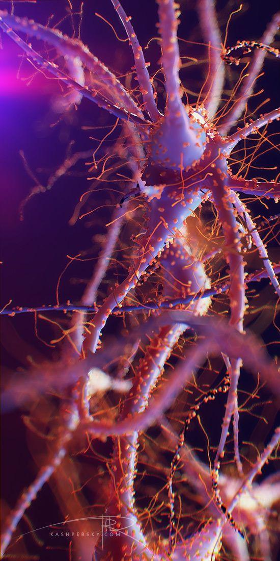 Brain Neurons by Alexey Kashpersky, via Behance