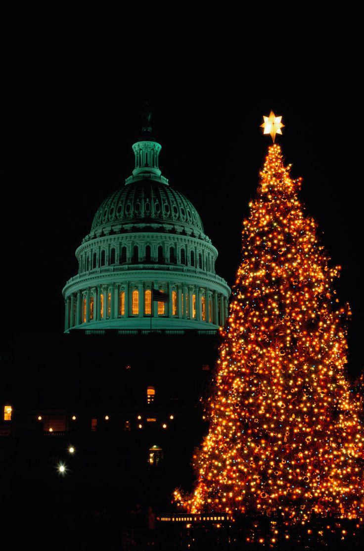 The 25+ best Balsam fir christmas tree ideas on Pinterest | Balsam ...