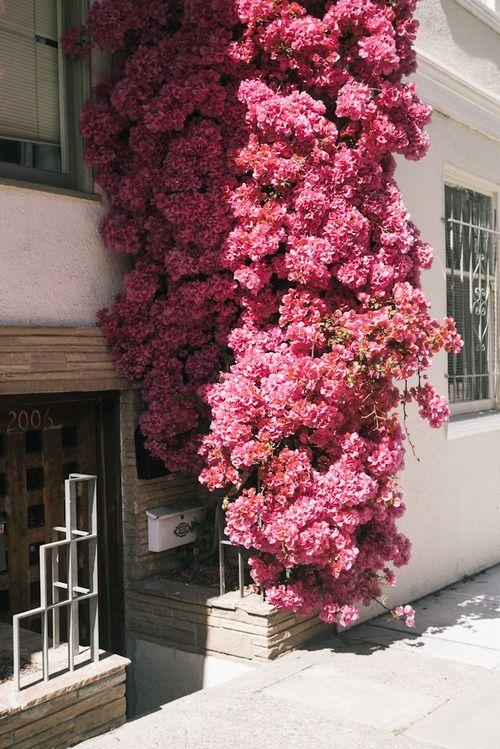 The Prettiest Pink Flowers Typo Logo Inspo Pinterest Flowers