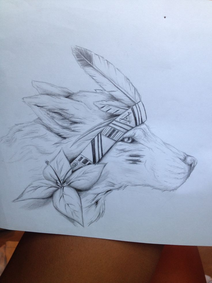 Indian wolf drawing