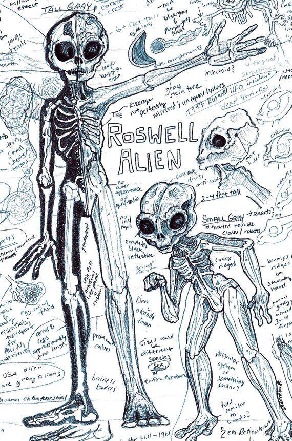 ef30105dccaadf164f10ace76ac98b8b?b=t alien anatomy print gray alien extraterrestrial art monster